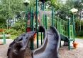 Parc Armand-Paris, Arr. Beauport, Québec